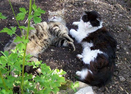 Catsnooze