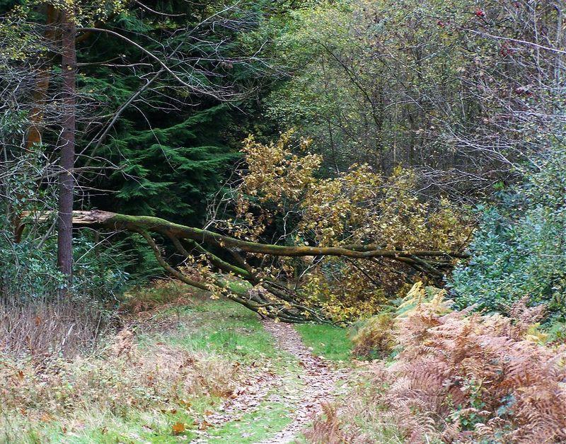Treedown