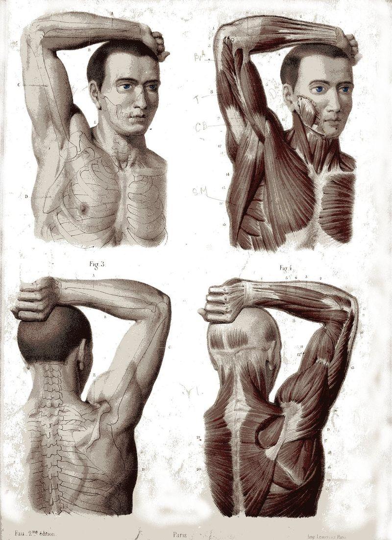 Anatomical 1