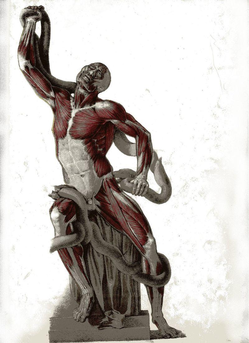 Anatomical 3