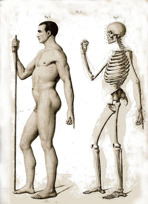 Anatomical 2