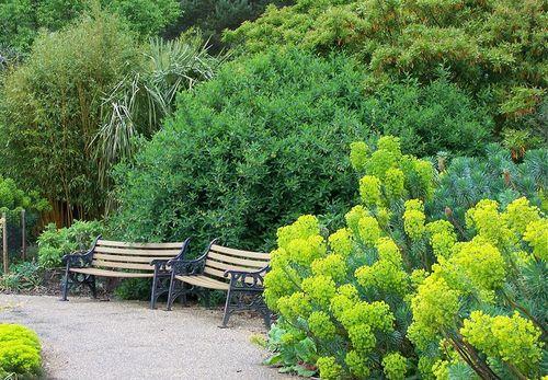 Euphorbia1