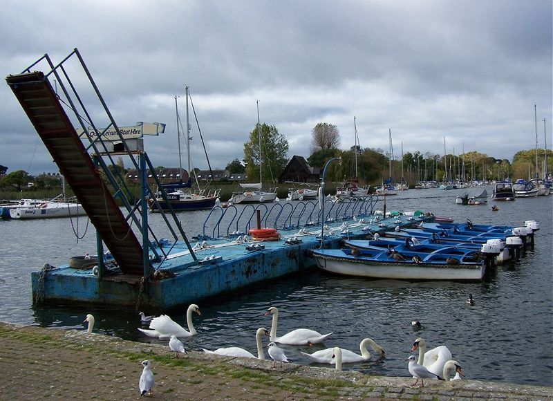 Gulls&swans
