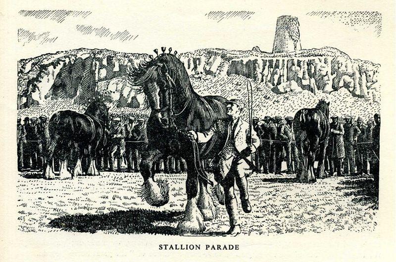 Stallion parade