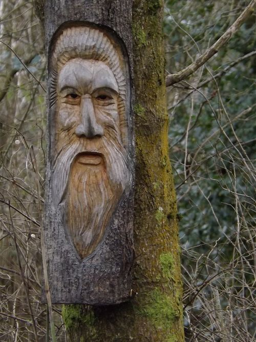 Old man of the woods