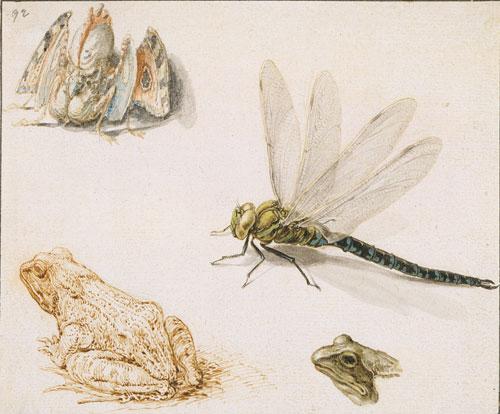 De-Gheyn_Frog,-Dragonfly,-Fantastic-Bird Jacob de Gheyn 1565-1629