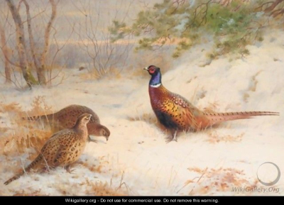 Thorburn_A-Winter-Dawn%2C-Pheasants-In-The-Snow