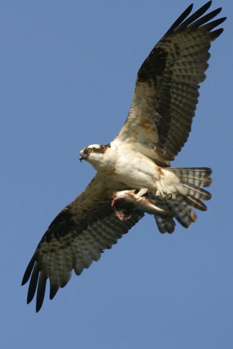 Osprey3lr