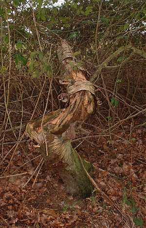 Treetrunk2