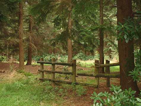 Woods1a